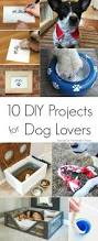 best 25 dog things ideas on pinterest dog canned dog food and