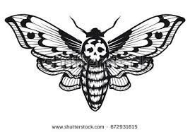 skull deaths head hawk moth sitting stock vector 672931618