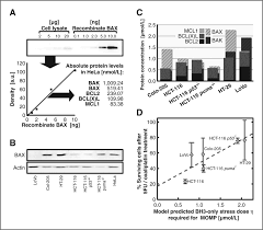 systems analysis of bcl2 protein family interactions establishes a