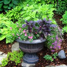 Outdoor Potted Plants Full Sun by How To Container Garden The Essentials