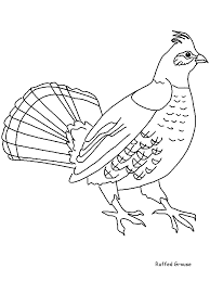 ruffedgrouse animals coloring pages u0026 coloring book