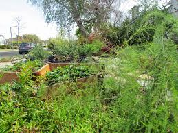 mar vista green garden showcase 3201 butler avenue cluster 2