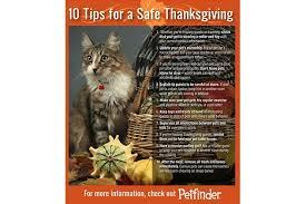 10 tips for a safe thanksgiving petfinder