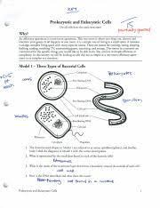 prokaryotic and eukaryotic cells 1 kjcw 3l prokaryotic and