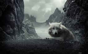 wolf wallpaper hd wallpapersafari