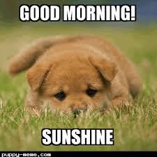 Good Morning Sunshine Meme - 1428759425024 png