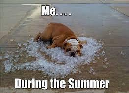 Hot Day Meme - hot day dog meme slapcaption com adorable adorkable creatures