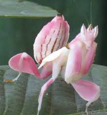 What Is An Orchid Flower - an orchid mantis next to the butterfly possibly the most