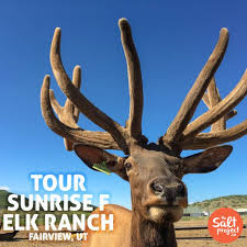 Utah Wildlife Tours images Sunrise f elk ranch the salt project things to do in utah with jpg