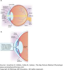 Pathway Of Light Through The Eye Neurophysiology Medical Physiology The Big Picture