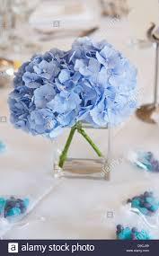 hydrangea wedding a hydrangea flower table centre at a wedding stock photo