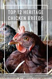 heritage chicken breeds for your backyard with chicken breeds