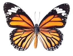 butterfly options trading archives www sheridanmentoring com