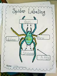 fun with firsties spiders aren u0027t insects