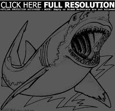 great white shark drawing clipart panda free clipart images