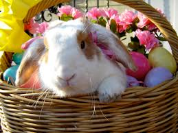 rabbit easter basket bunny in an easter basket in the easter baskets bunny