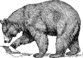 free bear coloring page clipart 1 page of public domain clip art