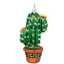 80 best cactus mania images on cacti cactus and