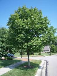 the meaning and symbolism of the word ash tree