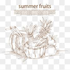 fruit sketch png images vectors and psd files free download on