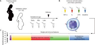 an immune clock of human pregnancy science immunology