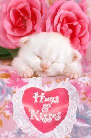 imagenes de amor con rosas animadas imagen animada de lindo gatito con detalles y gesto de amor rosas y
