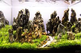 aquascaping layouts with stone and driftwood ohko dragon stone rock ada aquarium tropical fish plant shrimp