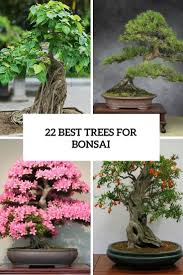best 25 indoor bonsai ideas on pinterest indoor bonsai tree