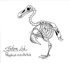 dodo skeleton by kawekaweau on deviantart