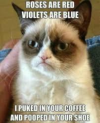 best 25 funny cat memes ideas on pinterest cat memes funny cat
