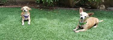 Is It Legal To Bury Your Dog In The Backyard - monterey county ca the law