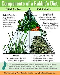 rabbit food the components of a rabbits diet hay grass commercial food