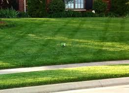 emerald green lawncare a full service lawn care company serving