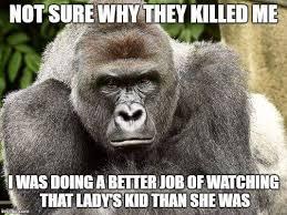 Gorilla Meme - a harambe the gorilla image macro harambe the gorilla know your meme