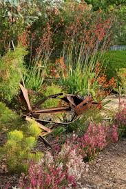small native plants for australian gardens photos hgtv a curving garden border and mixtures of colorful