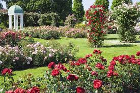 small rose garden design ideas aesthetic and wonderful rose