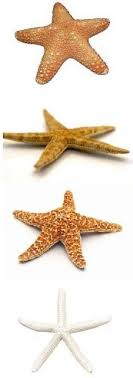brown sugar starfish mermaid the sea