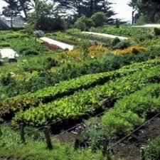 Botanical Garden Internship The Community Garden Internship Project Institute For Mindful