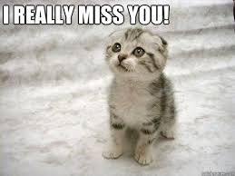 Funny I Miss You Meme - i really miss you cute kitten quickmeme
