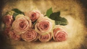 Pink Roses Wallpaper by Vintage Soft Pink Roses Wallpaper And Background 1600x900 Id