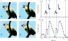 Anatomy And Physiology Songs Vocal Mechanics In Darwin U0027s Finches Correlation Of Beak Gape And