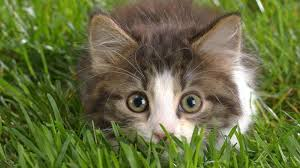 indoor gardens and cats keeping your pets out of your crops