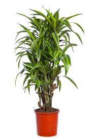 7 houseplants for low light conditions
