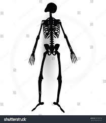 halloween skeleton silhouette vector image skeleton silhouette prone pose stock vector 297780740