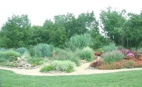 landscape grasses ornamental grass garden planting ornamental
