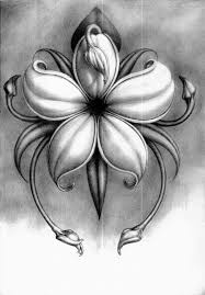pencil drawing for flowers best 25 pencil drawings of flowers