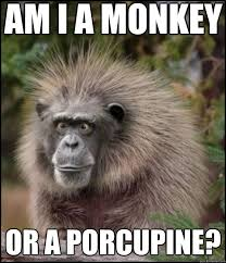 Funny Monkey Memes - funny monkey memes am i a monkey or a porcupine what am i