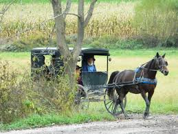 Ohio Amish Country Map by Buggy Ride At Miller U0027s Amish Farm Near Walnut Creek Ohio Amish