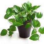 house plants names and pictures house plant names with pictures 41