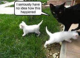 Good Luck Cat Meme - grace elliot blog black cats lucky or unlucky